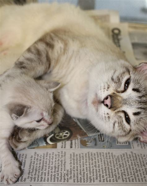 san antonio pound san antonio s animal care services desperately needs your newspapers to line pet