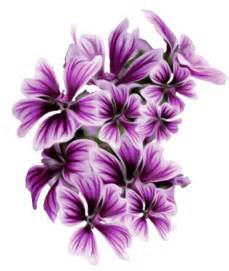flowers png yahoo image search results flores