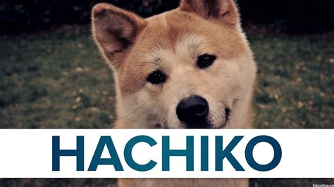Hachi Top top 10 facts hachiko top facts