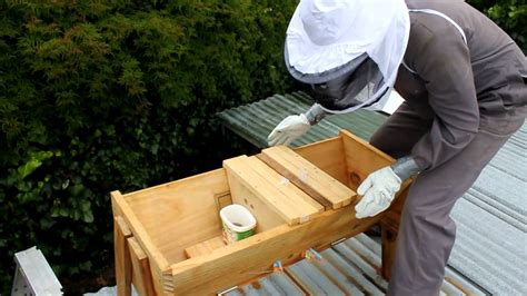 buy top bar hive how to feed your bees and treat for varroa in a top bar