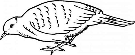 where to find food coloring quail find for food coloring page color