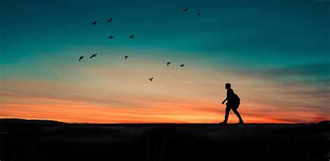 gambar tindakan backlit pantai burung fajar senja