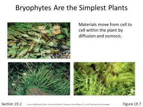 Section 22 2 Bryophytes by Chapter 19 Plants 169 G R Quot Quot