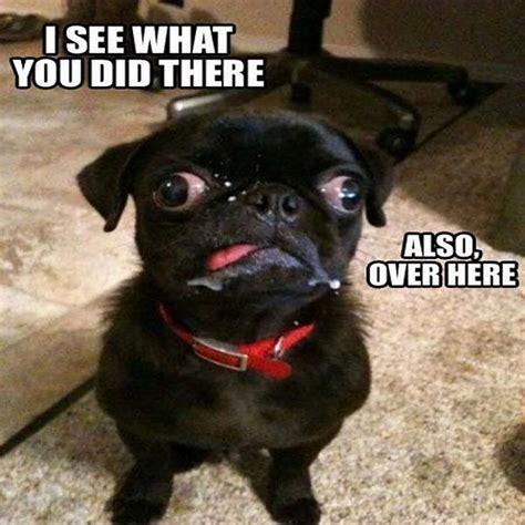 Very Funny Memes 2016 - very funny memes 2016 28 images 18 funny political