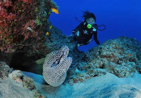 le de plongee a la d 233 couverte des fonds marins ile de la r 233 union tourisme