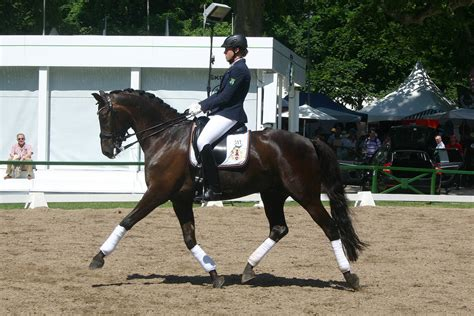 creative dressage schooling enjoy the process with 55 meaningful exercises books dressage trot stock by luda stock on deviantart