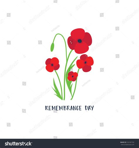 remembrance day poppies on white background remembrance