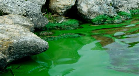 israel and stuff 187 israel s genetically altered algae can