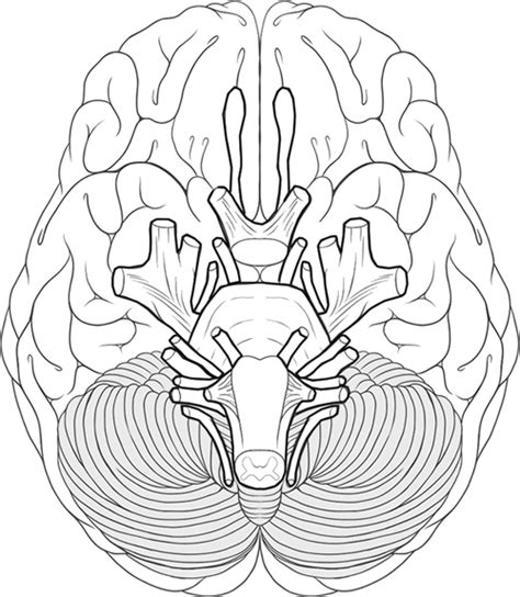 anatomy and physiology coloring workbook answers page 62 the human brain coloring book answers coloring page
