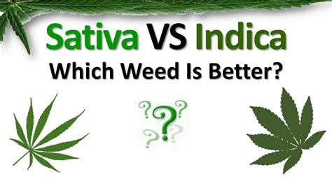 which is better or indica vs indica which is better