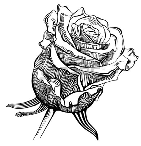 black and white drawing of rose clipart best