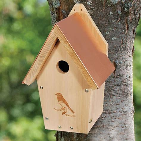 bluebird house bluebird houses box attracting backyard bluebirds