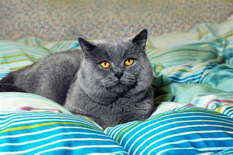 cat pooping on bed ask a vet why does the cat poop on the bed washingtonian