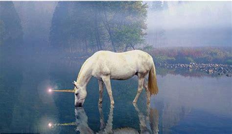 unik sarang unicorn di korea utara telah ditemukan aneka media informasi