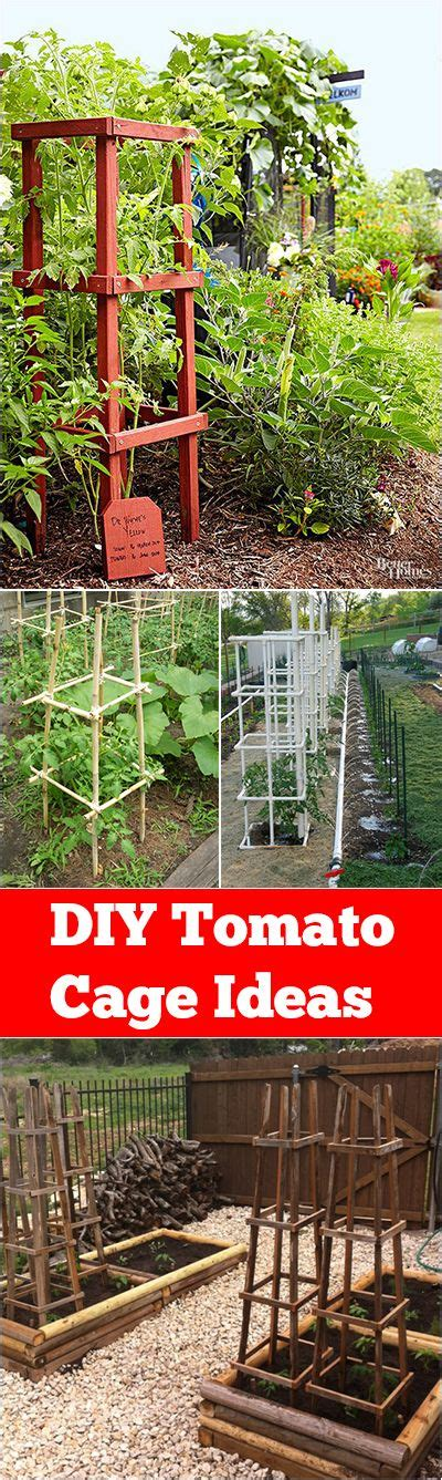 Tomato Garden Ideas 25 Best Ideas About Tomato Cages On Staking Tomato Plants Tomato Support And