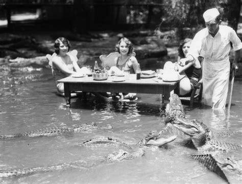 gator dining cus alligator org dining with alligators