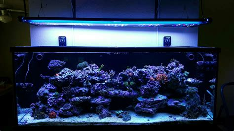 diy t5 aquarium lighting diy hybrid malibu s400 t5 ledzeal