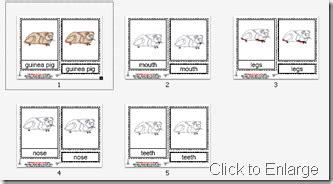 montessori materials flower nomenclature cards age 3 to 6 montessori materials guinea pig nomenclature cards age 3