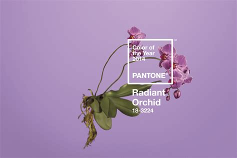 colour of the year radiant orchid my take on pantone s 2014 color of the year radiant