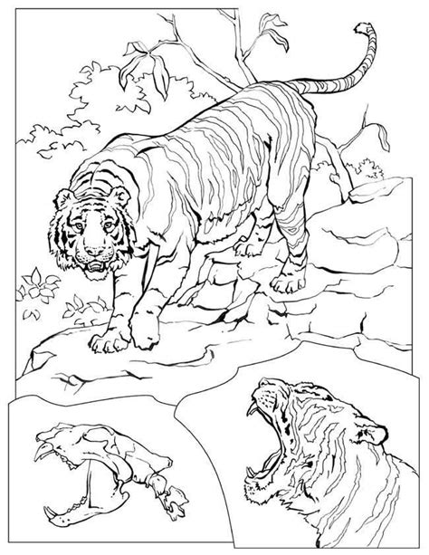 lion coloring page pdf lions tigers coloring pages free printable download