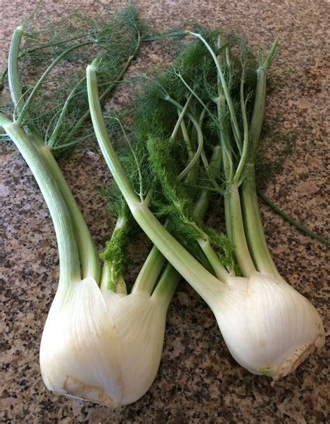 top 28 what part of fennel do you use how to cut fennel a step by step guide cooking tips