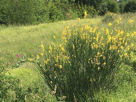 erba di casa erba di casa una passeggiata nei colli euganei alla