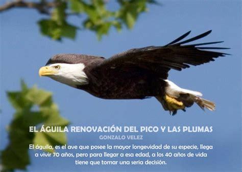 el guila en la 8498890152 el 225 guila renovaci 243 n del pico y las plumas