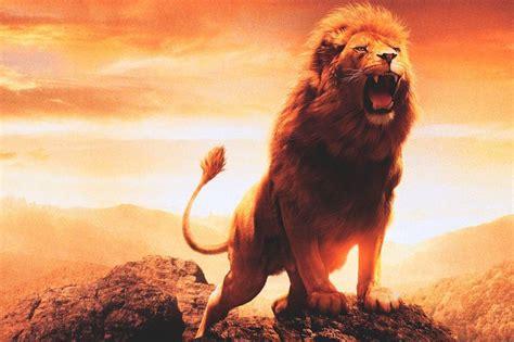 imagenes de animales leon image gallery el leon