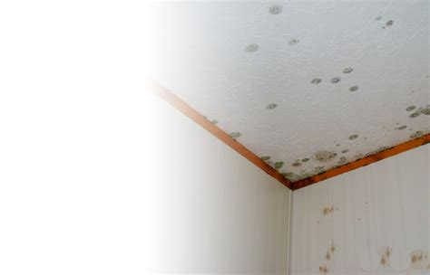 Removing Mold From Drywall Ceiling by How To Remove Mildew From Ceiling How To Clean A Car Ceiling 8 Steps With Pictures Wikihow
