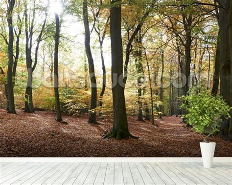 panoramic wall murals autumn forest panoramic wall mural autumn forest