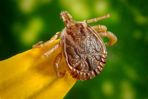 lawn treatment for ticks in kansas city aspen lawn