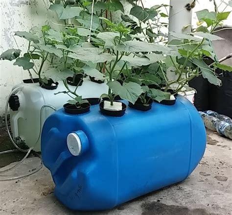 membuat nutrisi hidroponik dari bahan alami cara membuat hidroponik sederhana hidrafarm