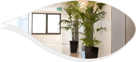 good office plants best indoor desk plants whitevan