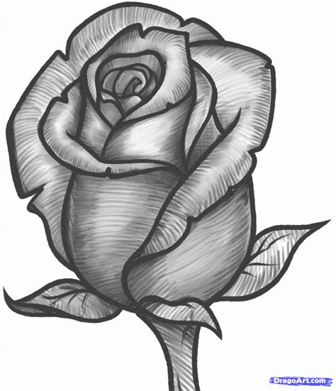 Painting Ideas For House by Pencil Drawing Pictures Of Roses 1000 Images About Drawing