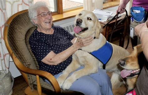 for therapy dogs therapy dogs provide treatment in waterville but demand calls for more volunteers