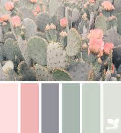 colored cactus cacti color design seeds