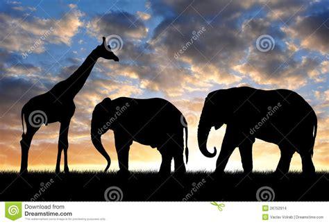 imágenes de jirafas y elefantes elefante y jirafa de la silueta imagenes de archivo
