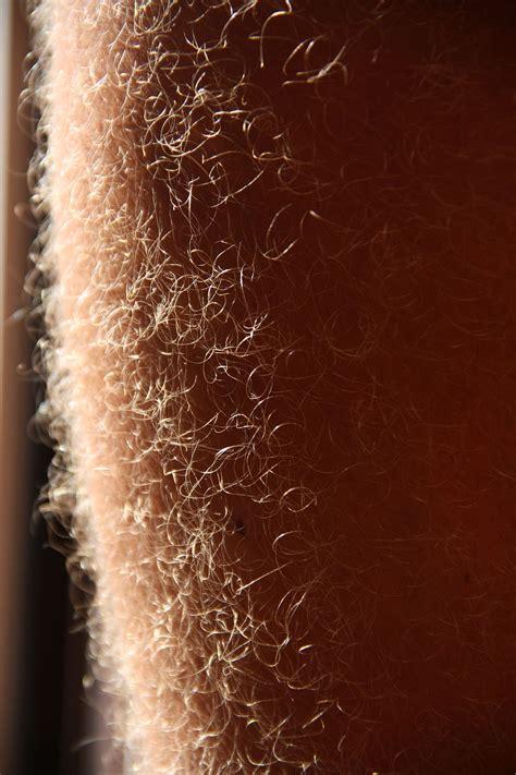 pubic hair on thigh leg hair wikipedia