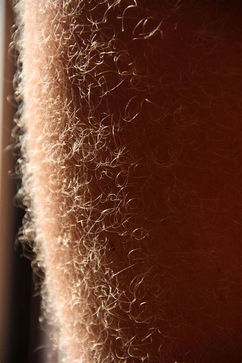 longest pube hair leg hair wikipedia
