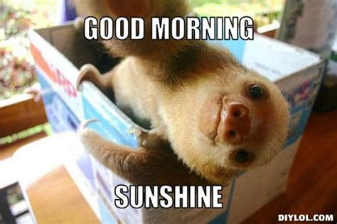 Good Morning Sunshine Meme - funny picture clip funny pictures good morning starshine