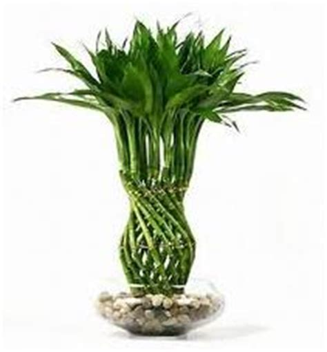 low light house plants the best low light house plants home interior design themes