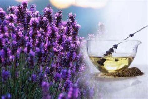Minyak Bunga Lavender 25ml Murni kulit dan wajah mulus dengan minyak bunga lavender republika