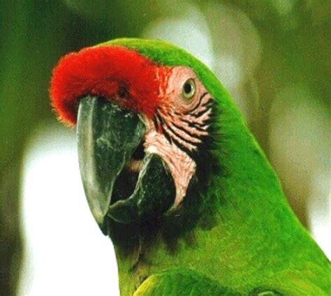 imagenes animales endemicos de mexico ranking de las especies en peligro de extinci 243 n en