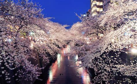 imagenes korea japon au japon le printemps rime avec cerisiers en fleur et