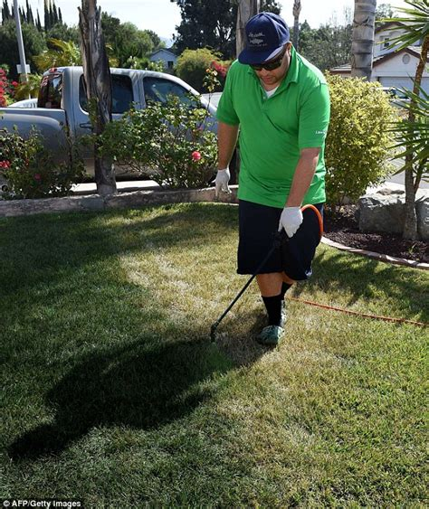 spray painting grass green keeping up appearances californians spray painting grass