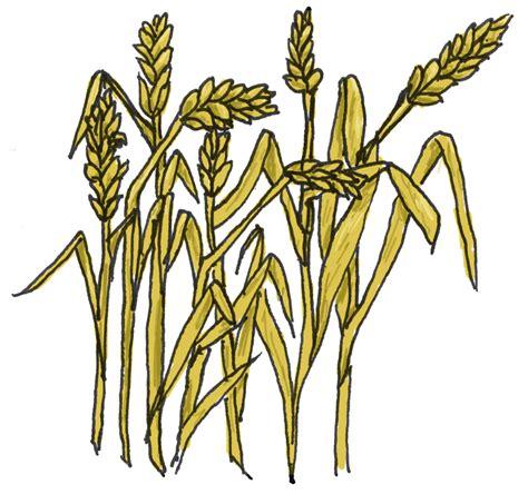 wheat clip wheat images clip clipart best