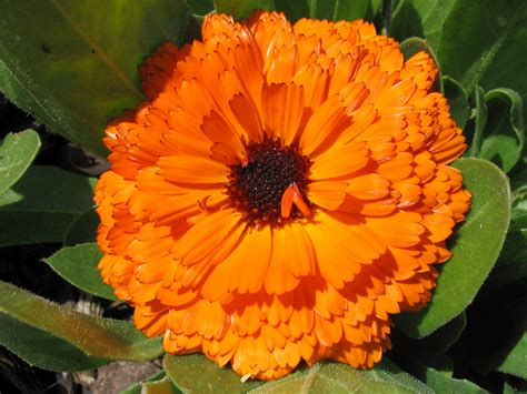Orange Flowery file orange flower jpg