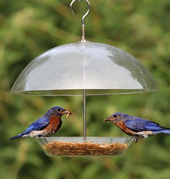 dome top bluebird feeder this looks like a great feeder