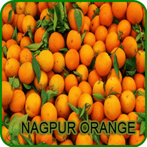 Orange City Mba College Nagpur by What Is The Best And Worst Thing About Maharashtra The