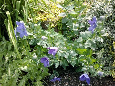 Garten Bestellen blumen garten pflanzen forum gartenratgeber